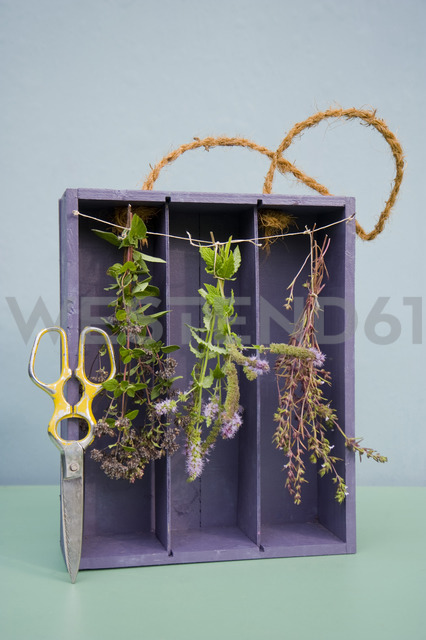 Drying spices in old case of vine, oregano, pepper mint and savory, pruner - GISF00383