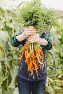 Unrecognizable senior woman holding bunch of harvested carrots - NMSF00250