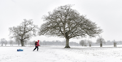 UK, woman pulling sled through snow-covered winter landscape - ALRF01277