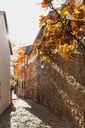 Germany, Rhineland-Palatinate, Freinsheim, city wall and empty way in autumn - GWF05642