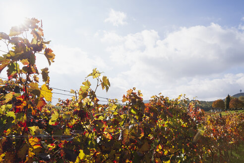 Germany, Rhineland-Palatinate, Leistadt, vineyards in autumn colours, German Wine Route - GWF05645