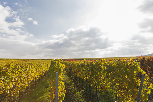 Germany, Rhineland-Palatinate, Weisenheim am Berg, vineyards in autumn colours, German Wine Route - GWF05648