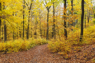 Germany, Rhineland-Palatinate, Palatinate Forest Nature Park in autumn - GWF05663