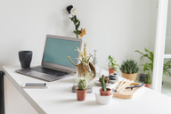 Laptop and variation of succulent plants at home - AFVF01537