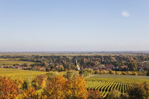 Germany,Rhineland-Palatinate, Pfalz, German Wine Route, wine village Forst and vineyards in autumn colours - GWF05669