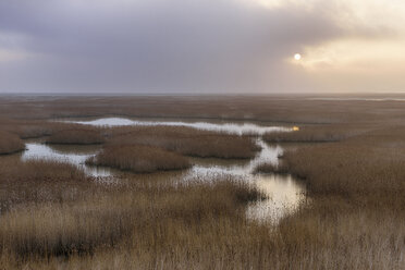 France, Le Havre, Seine River marsh with reed grass at sunrise - RUEF01930