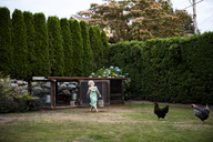 A young girl runs around with her backyard chickens near her family coop in Seattle, WA. - AURF04189
