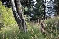 Backpacking Alaska Chugach Mountains - AURF04306