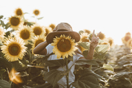 Sunflower with hat - OCAF00361