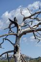 Spain, Barcelona, Montserrat, deadwood - AFVF01546