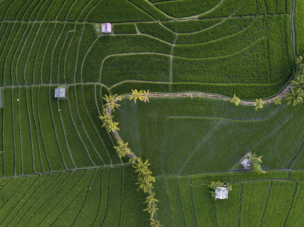 Indonesia, Bali, Aerial view of rice fields - KNTF01523