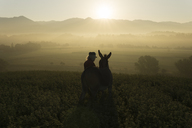 Italy, Tuscany, Borgo San Lorenzo, senior man standing with donkey in field at sunrise above rural landscape - FBAF00097