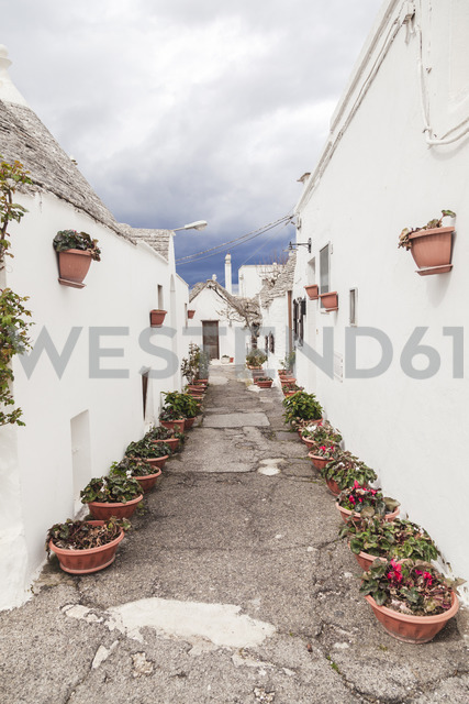 Italy, Apulia, Alberobello, view to alley with rows of flowerpots - FLMF00053