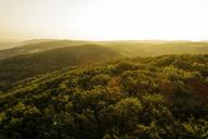 Austria, Lower Austria, Vienna Woods, Biosphere Reserve Vienna Woods, Aerial view of forest at sunrise - HMEF00005