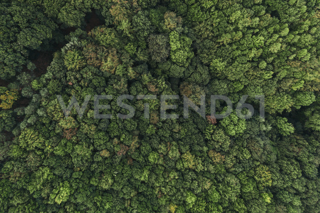 Austria, Lower Austria, Vienna Woods, Biosphere Reserve Vienna Woods, Aerial view of forest in the early morning - HMEF00008
