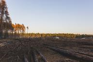 Germany, Brandenburg, Beelitz, Pine Forest, slash and burn - ASCF00884