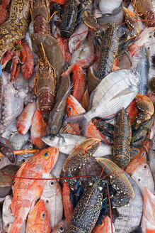 Variety Of Fish On The Fishing Port Of Atlantic Coast - AURF06357