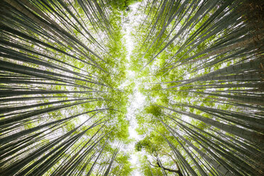 Low angle view of bamboo grove against sky in forest - CAVF48917