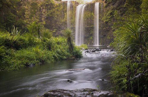 New Zealand, North Island, Northland, Whangarei Falls - MKFF00437