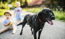 Portrait of panting black dog on the street - HAPF02766