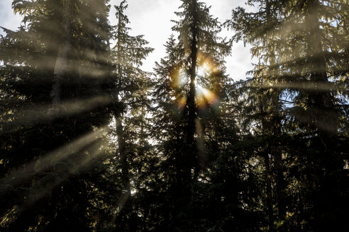 Sunbeams shining from behind trees in forest, Whistler, British Columbia, Canada - AURF07308