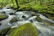 Great Britain, England, Cornwall, Liskeard, River Fowey at Golitha Falls - RUEF01970