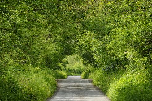 United Kingdom, England, Cornwall, Rural road through green tunnel in forest - RUEF01976