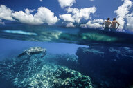 Underwater split level view of Hawaiian sea turtle, approaching two men from behind, North Shore Oahu, Hawaii, USA - AURF07384
