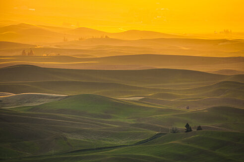 Scenery with rolling hills at sunrise, Steptoe Butte State Park, Palouse, Washington State, USA - AURF07556