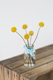 Yellow flower heads in vase - JUNF01300