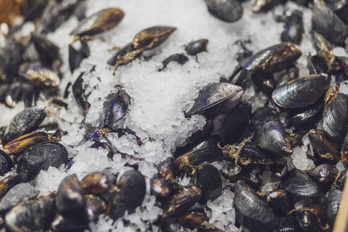USA, Seattle, Pike Place Public Market, blue mussels in ice - MMAF00565