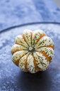 Ornamental pumpkin - JUNF01314