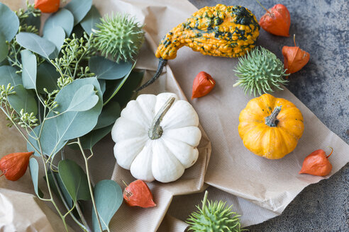 Autumnal decoration, ornamental pumpkins - JUNF01320