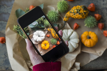 Autumnal decoration, ornamental pumpkins, woman taking photo with smartphone - JUNF01323