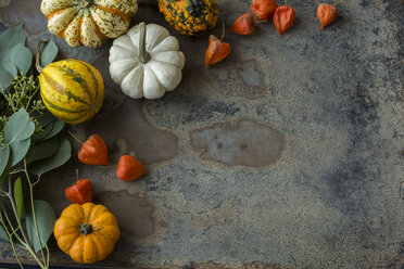 Autumnal decoration, ornamental pumpkins - JUNF01326
