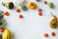 Autumnal decoration, ornamental pumpkins - JUNF01329
