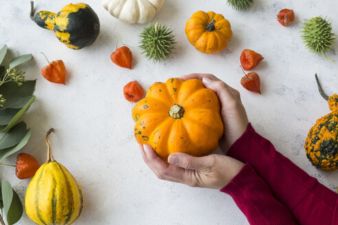 Autumnal decoration, ornamental pumpkins - JUNF01332