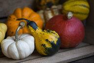 Ornamental pumpkins - JUNF01335