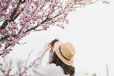 Young woman wearing hat photographing cherry blossoms with smart phone at park - CAVF49012