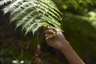 Spain, Canary Islands, La Palma, close-up of a hand touching green forest fern leaf - PACF00160