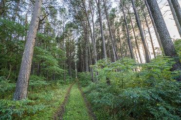 Forest in Latvia - KKAF02347