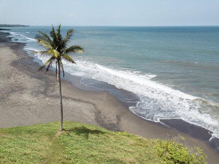 Indonesia, Bali, Yeh Gangga beach, one palm - KNTF01910