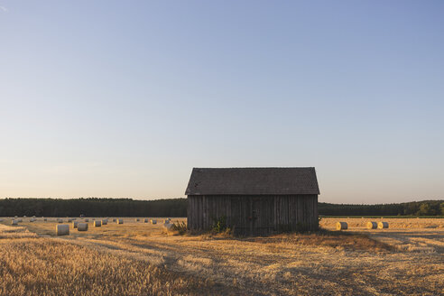 Barn on a field at harvesttime in the evening - ASCF00892