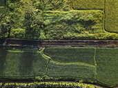 Indonesia, Bali, Ubud, Aerial view of rice fields - KNTF01978