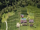 Indonesia, Bali, Ubud, Aerial view of rice fields - KNTF02002