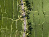 Indonesia, Bali, Ubud, Aerial view of rice fields - KNTF02008