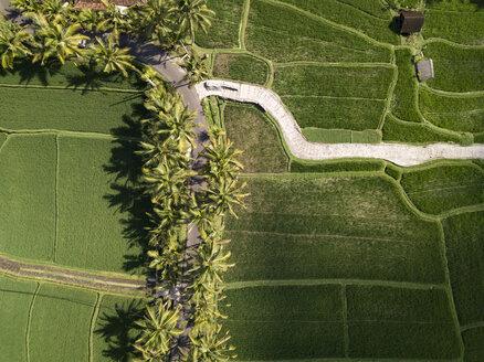 Indonesia, Bali, Ubud, Aerial view of rice fields - KNTF02014