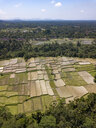 Indonesia, Bali, Ubud, Aerial view of rice fields - KNTF02017