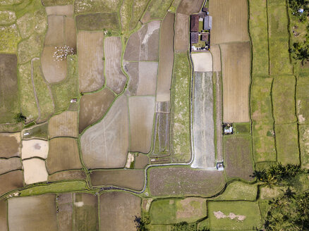 Indonesia, Bali, Ubud, Aerial view of rice fields - KNTF02020