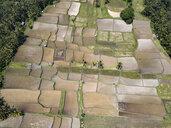 Indonesia, Bali, Ubud, Aerial view of rice fields - KNTF02023